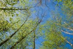 Солнечный день в лесе стоковые изображения rf