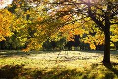 Солнечный день в осени Стоковое Изображение