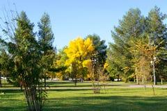 Солнечный день в парке города в осени Стоковая Фотография RF