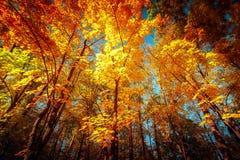 Солнечный день в парке осени с красочными деревьями Стоковая Фотография RF