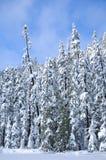 Солнечный день зимы стоковое изображение