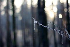 Солнечный день зимы стоковые изображения