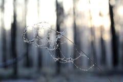 Солнечный день зимы Стоковые Фотографии RF