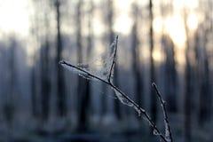Солнечный день зимы стоковая фотография