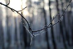 Солнечный день зимы стоковое фото