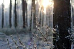 Солнечный день зимы Стоковые Фото