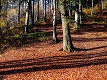 Солнечный день осени в лесе Стоковая Фотография