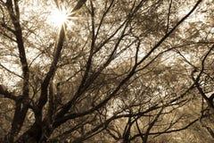 Солнечный день пока пеший туризм в утре стоковое фото