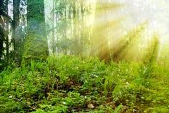 Солнечный день стоковая фотография
