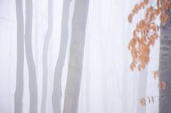 Солнечный день autum на ландшафте предпосылки воды, фото от Словакии стоковые фото