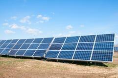 Солнечный завод Стоковые Изображения RF