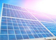 Солнечный завод Стоковая Фотография