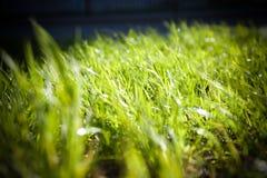Солнечный зеленый цвет Стоковое Фото