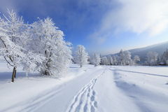 Солнечный зимний день в лесе n12 Стоковые Фотографии RF