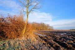 Солнечный зимний день в низменности стоковая фотография