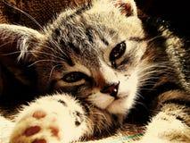 Солнечный котенок Стоковые Фотографии RF