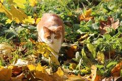 Солнечный кот Стоковое Фото