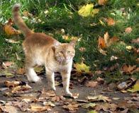 Солнечный кот Стоковая Фотография RF
