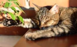 Солнечный кот Стоковые Изображения RF