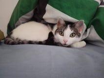 Солнечный кот стоковое фото rf