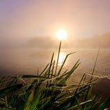 Солнечный одуванчик Стоковая Фотография RF