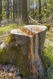 Солнечный пейзаж леса с стволом дерева стоковое изображение