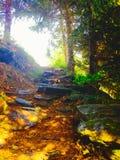 солнечный путь Стоковые Фотографии RF