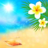 Солнечный пляж лета с раковиной и цветками Стоковая Фотография RF