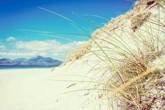 Солнечный пляж с песчанными дюнами, высокорослой травой и голубым небом Стоковое Изображение
