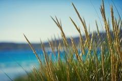 Солнечный пляж с песчанными дюнами, высокорослой травой и голубым небом Стоковая Фотография