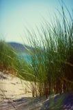 Солнечный пляж с песчанными дюнами, высокорослой травой и голубым небом Стоковое фото RF