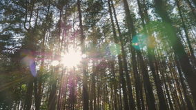 Солнечный свет вспыхивает через деревья сток-видео