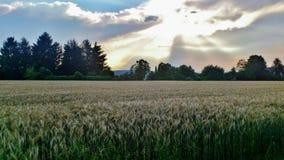 Солнечный свет выходить облака Стоковое Фото