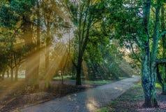 Солнечный свет в деревьях стоковое фото rf