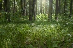 Солнечный свет в зеленом весеннем времени леса стоковое фото rf