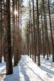 Солнечный свет в зиме Стоковые Изображения