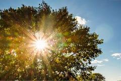 Солнечный свет в листве дуба Стоковое Изображение RF