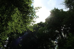 Солнечный свет в древесинах Стоковое Изображение RF
