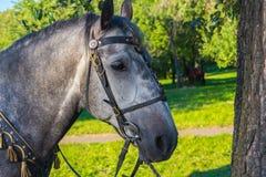 Солнечный свет в сером глазе лошади Стоковые Изображения