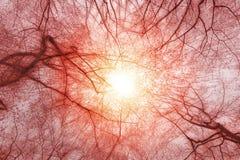 Солнечный свет леса осени Стоковые Изображения