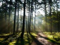 Солнечный свет леса Стоковое фото RF