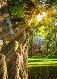 Солнечный свет лета Иллюстрация в стиле картины маслом Стоковые Изображения RF