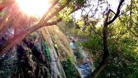 Солнечный свет лить через деревья Стоковые Фотографии RF