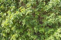 Солнечный свет и зеленый куст Стоковое Фото