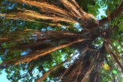 Солнечный свет на деревьях Стоковое Фото