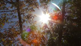 Солнечный свет на листьях деревьев акции видеоматериалы