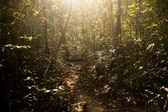 Солнечный свет на следе джунглей через остров Rong Sanloem Koh, Камбоджу Стоковое Изображение
