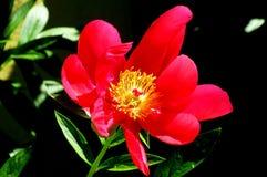Солнечный свет над цветком стоковая фотография rf