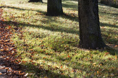 Солнечный свет осени Стоковые Фотографии RF