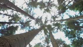 Солнечный свет древесной зелени природы лесных деревьев акции видеоматериалы